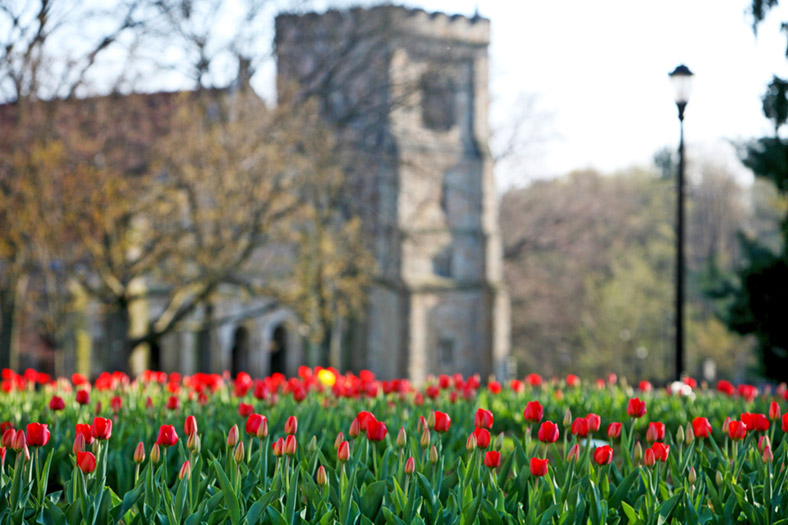 Chapel with Tulips