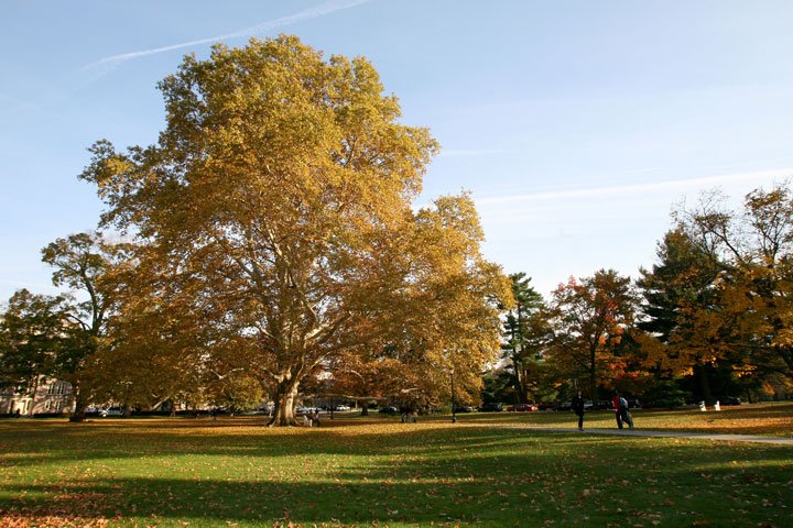 Library Quad in the Fall